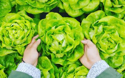 Lo que nos puede enseñar un agricultor chino